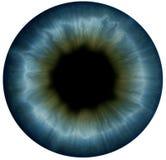 Pupila Imagen de archivo