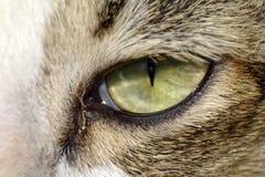 Pupilla del ` s dell'occhio del gatto immagine stock libera da diritti