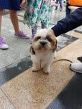 Pupper image libre de droits