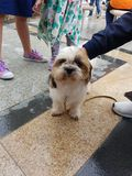 Pupper royalty-vrije stock afbeelding