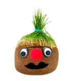 Puppet with ground wheat sprouts for hair. Royalty Free Stock Photography