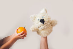 Puppet show dog on a gray background. Space for text or replicas.  Royalty Free Stock Photo