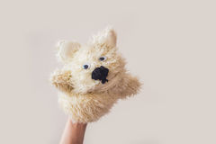 Puppet show dog on a gray background. Space for text or replicas.  Stock Images