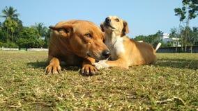 puppi с его мамой стоковые фото
