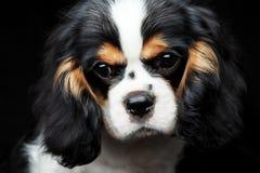Puppie del perro Imagen de archivo libre de regalías