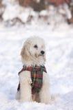 Puppie die in sneeuw situeert royalty-vrije stock afbeelding