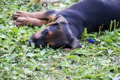 Puppie en la tierra Foto de archivo libre de regalías