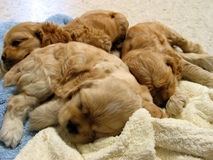 Puppies stock images