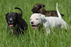 Puppies Stock Photos