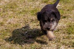 puppies Stock Foto's