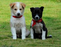 The Puppies... Stock Images