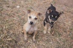puppies fotos de stock