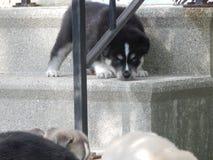 puppies Stock Afbeeldingen