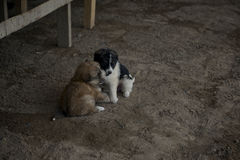 puppies Stock Foto's