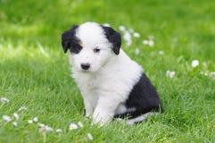 Free Puppies Stock Image - 7253721