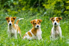 Puppies in action royalty free stock photography