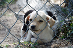 Puppies in Animal Shelter Stock Photo