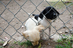 Puppies in Animal Shelter Stock Images