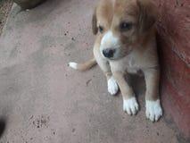 puppies stock image