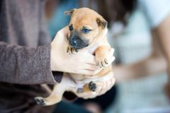 Puppies are being carried away by the owners. And wait to deliver it to the new owner Royalty Free Stock Image