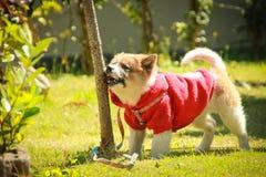 Dog in the garden. Stock Photos