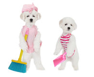 Puppies with brush and dustpan Stock Photo