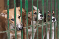 Puppies in the cage Stock Photography