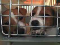 Dogs puppies in a cage. Puppies in cage Royalty Free Stock Image