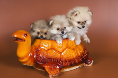 Puppies in ceramic pot Royalty Free Stock Photos