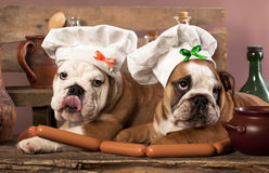 Puppies in chef's hat  and sausages Stock Photography