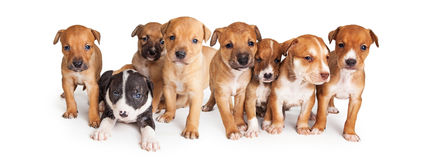 Puppies Facebook Cover Image Stock Photo