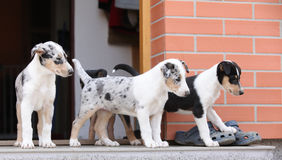Puppies first trip to the outer world Stock Image