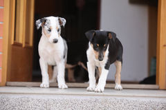 Puppies first trip to the outer world Royalty Free Stock Photo