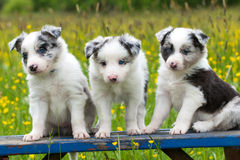Puppies on a garden bench Royalty Free Stock Images