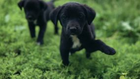 Puppies go on the grass