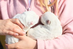 Puppies holded in kids hands Royalty Free Stock Photos