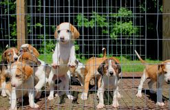 Puppies Royalty Free Stock Images