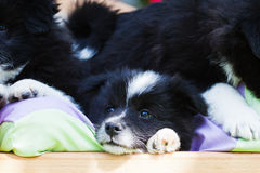 Puppies lying in a small bed Royalty Free Stock Images