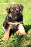 Puppies, mongrel pets. Two puppies, mongrel, sitting on the grass. Resting after playing Stock Image