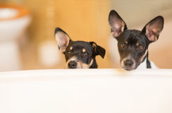Puppies outside tub Stock Photo