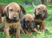 Puppies!. Pile of puppies outside in the grass Royalty Free Stock Images