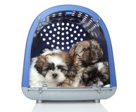Puppies in plastic carrier on white background Royalty Free Stock Photos
