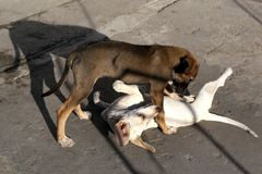 Puppies playing on the pavement stock photography