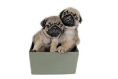 Puppies present. Stock Photo