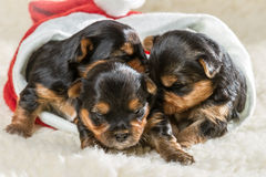Puppies in Santa Claus hat Royalty Free Stock Images