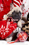 Puppies  in Santa costume on a white background. Christmas dachshund puppies and English bulldog in Santa costume Royalty Free Stock Photos