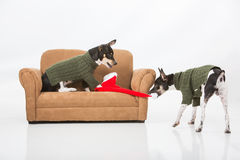 Puppies and Santa Hat Royalty Free Stock Photography