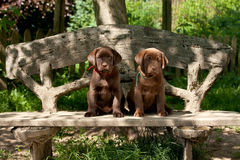 Puppies sitting on  bench Stock Photos
