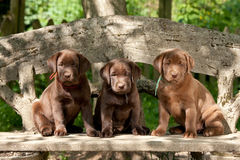 Puppies sitting on  bench Royalty Free Stock Images