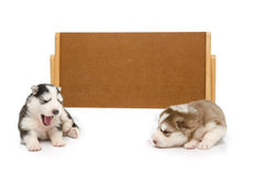 Puppies sleep with banner Royalty Free Stock Photo